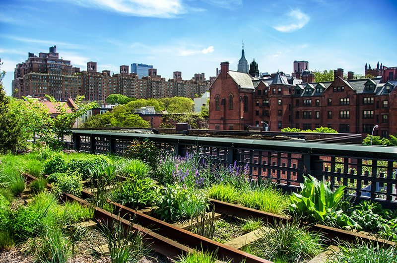 The High Line in Manhattan NYC