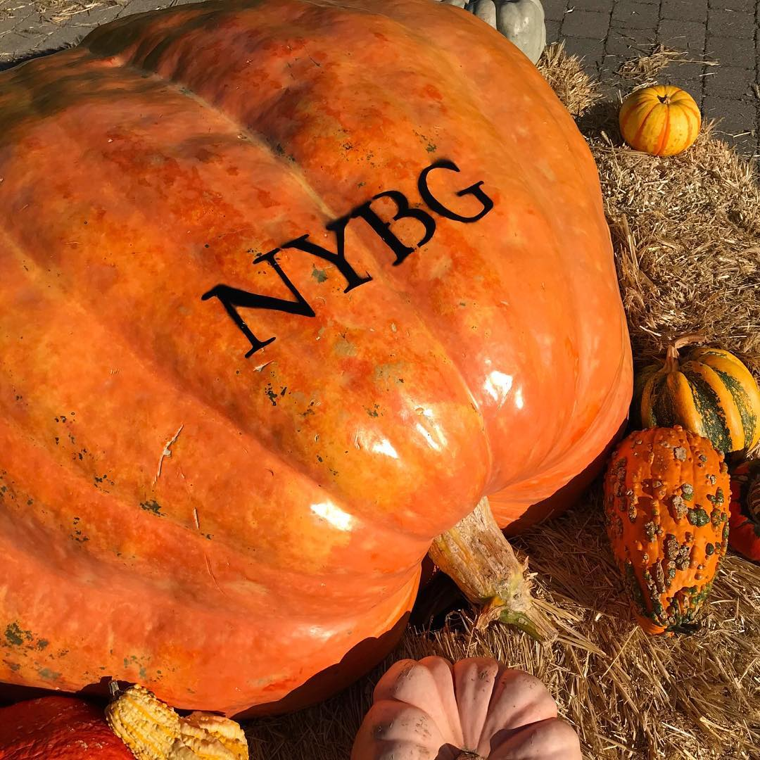 NYBG fall pumpkins by @nybg on Instagram