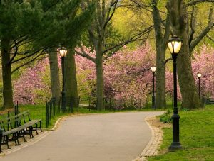 Central Park path with lamppost